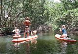 Balade en paddle dans la mangrove - voyages adékua