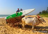 Semaine de Stand Up Paddle autour des magnifiques spots de Goa - voyages adékua